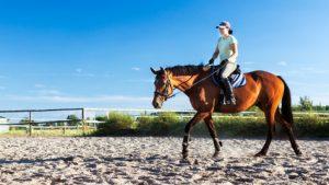 Costo lezione di equitazione Roma